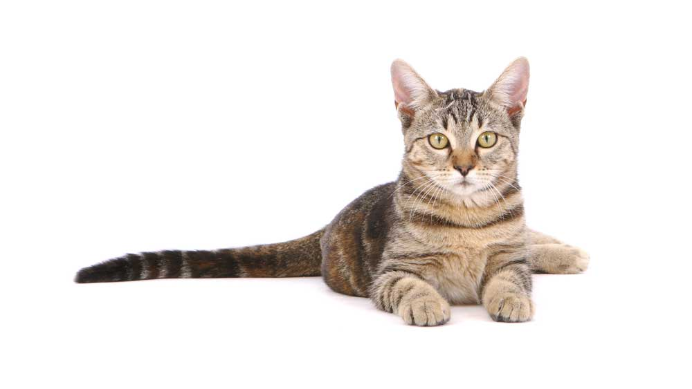 Cats represent less than 0.5% of animals needed in research. Through research, scientists have discovered a vaccine for feline leukemia and hope this breakthrough can be used as a model for a human HIV vaccine.