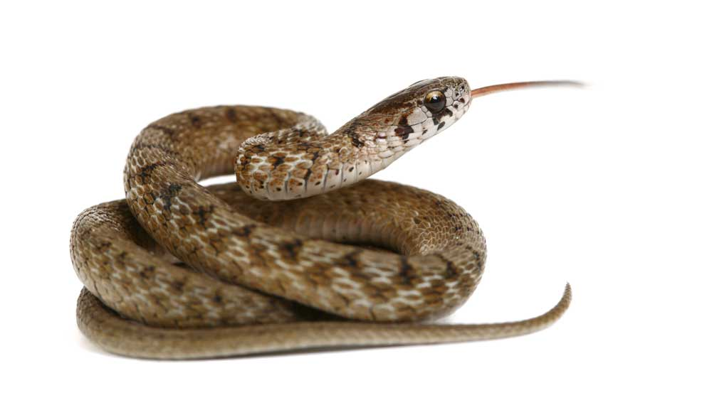 Snake venom has provided the raw material for medications to treat cancer, high blood pressure, diabetes, Alzheimer's and Parkinson's. Venom is also required to produce antivenom to treat snake bite.
